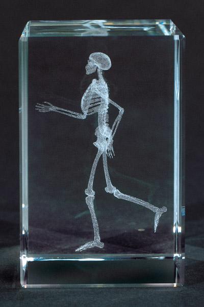 scheletro su vetro prod. medart